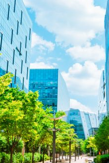 photo of a tree-lined laneway between two rows of glass commercial towers